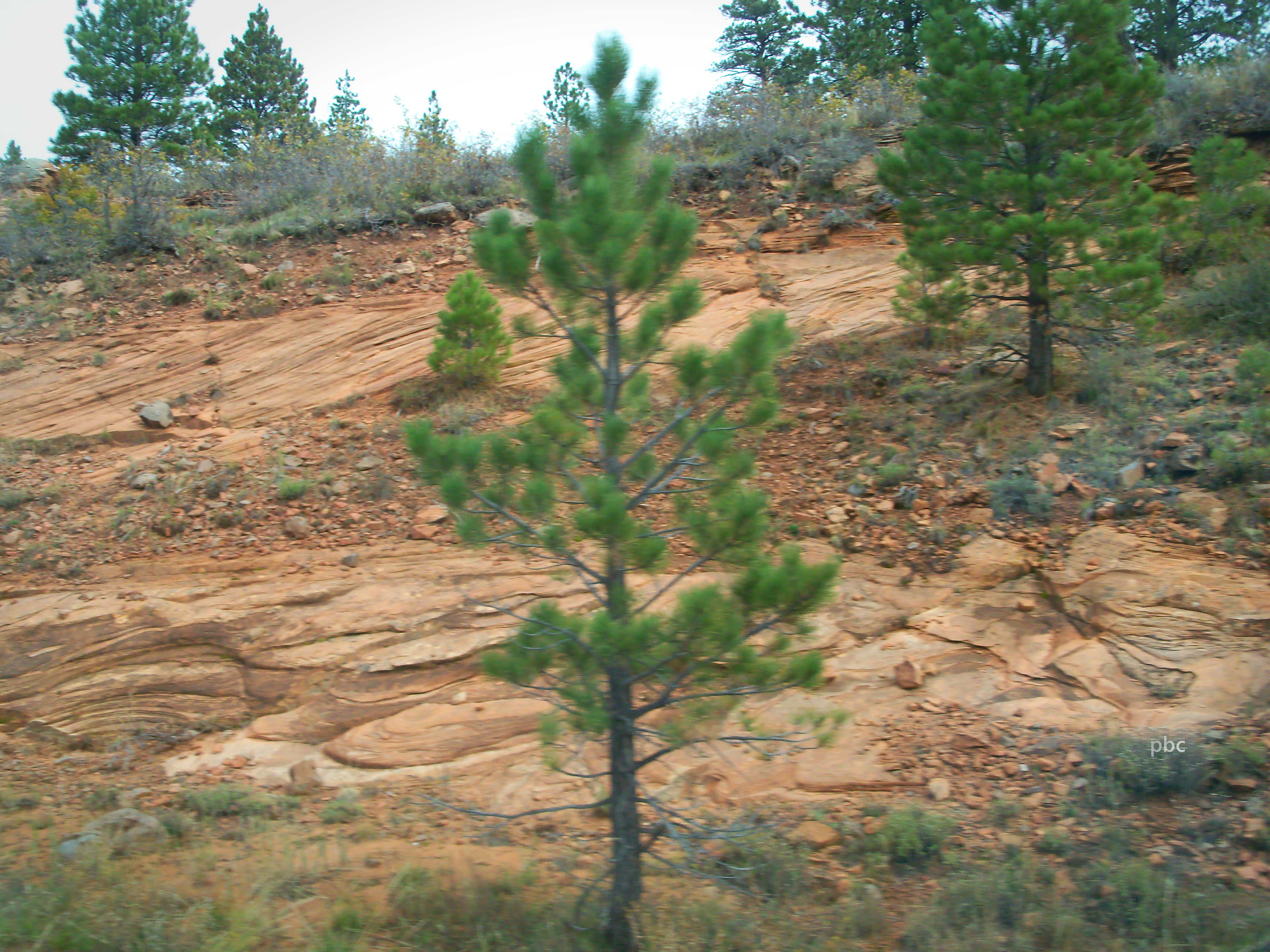 Green-Tree-and-Red-Rock