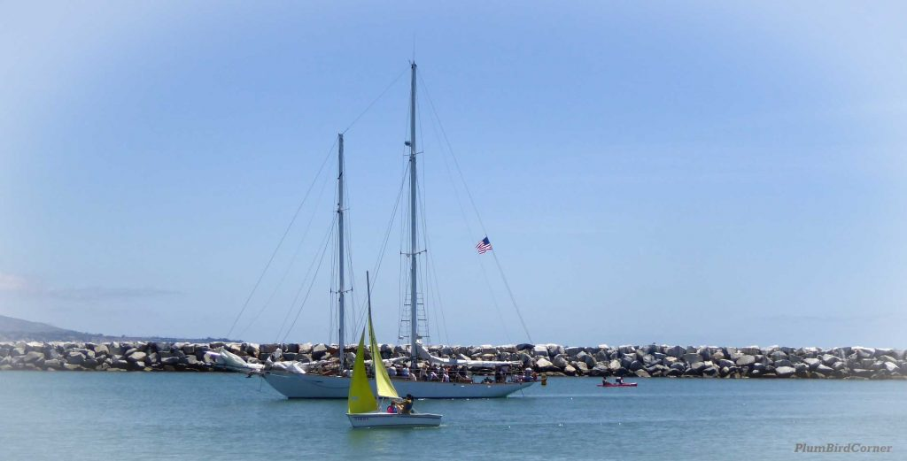 Sail-Boats-Dana-Point