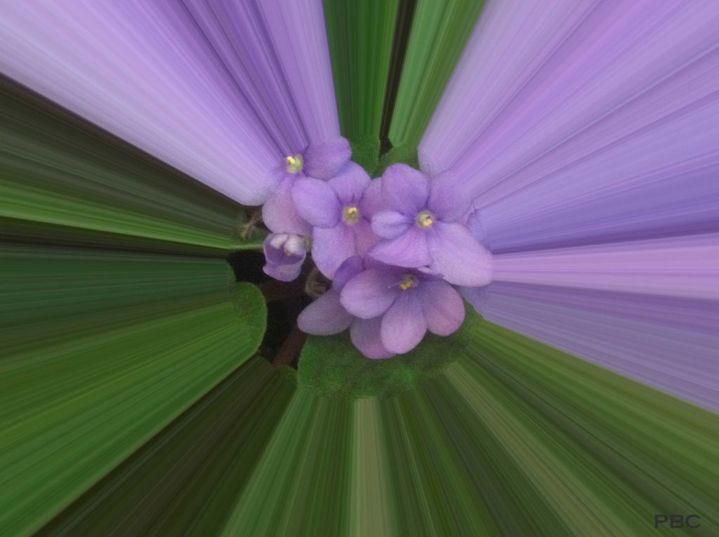 African Violet abstract photo